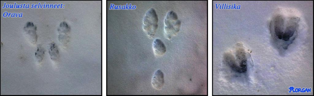 Sarjakuva20141227