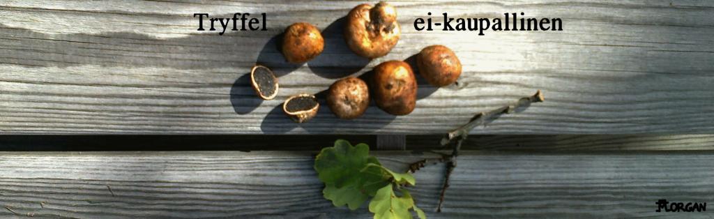 Sarjakuva20160829
